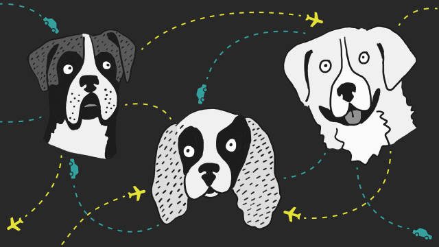 Where Do Adoptable Dogs in Your State Come From?